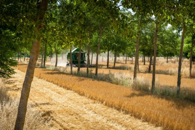 Agroforestry (Bron Inra)